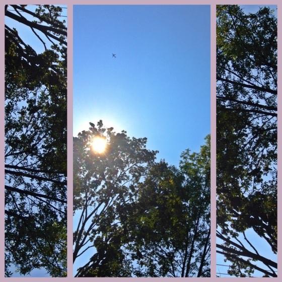 20120920-084050.jpg
